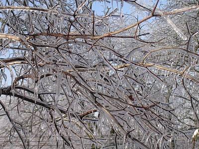 Ice In December Art Print by Dusty Reed