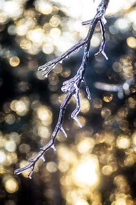 Photograph - Ice On Limb by Wayne Meyer