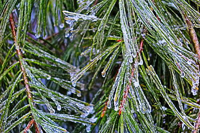 Ice On Pine Needles  Art Print