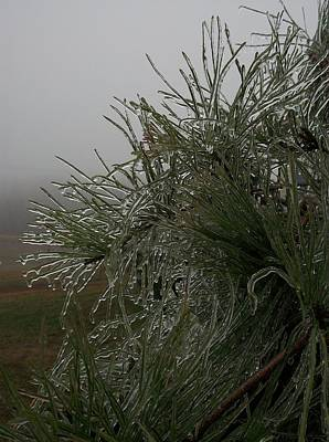 Ice On Pine Original