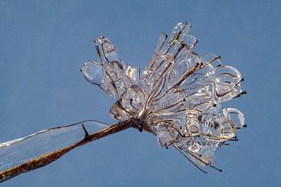 Photograph - Ice On Stems by Dawn Hagar