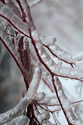 Photograph - Ice On Tree  by Douglas Pike