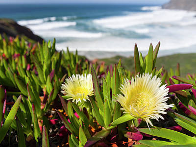 Algarve Wall Art - Photograph - Ice Plant At The Costa Vicentina by Martin Zwick