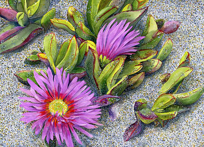 Ice Plant Original by Karen Wright