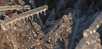 Photograph - Ice Rods by Douglas Pike