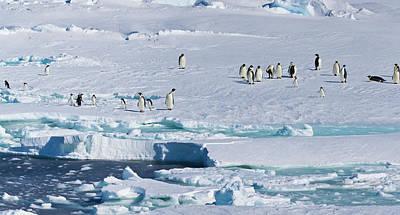 Emperor Penguin Photograph - Ice Shelf, Antarctica by Janet Muir