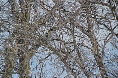 Photograph - Ice Storm 72 by Ericamaxine Price