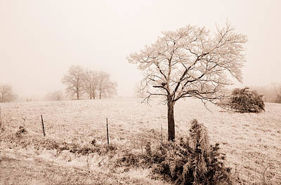 Photograph - Ice Storm by Brent Craft