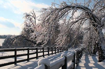 Photograph - Ice Storm by Douglas Pike