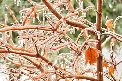 Photograph - Ice Storm by Puzzles Shum