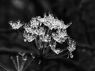 Photograph - Ice Weed by Thomas Samida