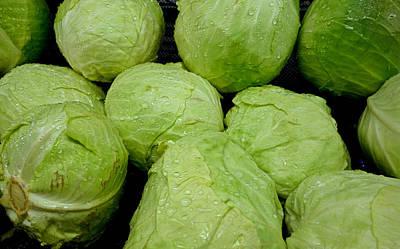 Photograph - Iceberg Lettuce by Robert Meyers-Lussier