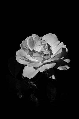 Photograph - Iceberg Rose by Charles Lupica