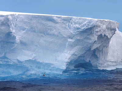 Photograph - Iceberg With Cape Petrel by Ginny Barklow