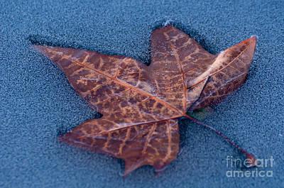 Photograph - Icebound by Simona Ghidini