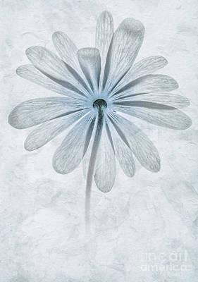 Windflower Photograph - Iced Anemone by John Edwards