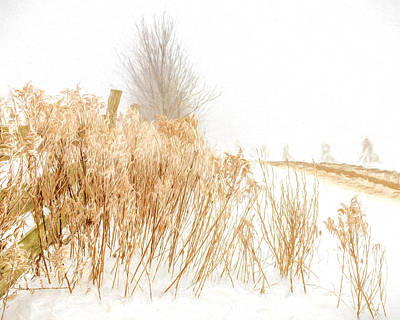 Iced Goldenrod At Fields Edge - Artistic Art Print