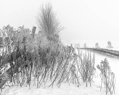 Photograph - Iced Goldenrod At Fields Edge - Bw by Chris Bordeleau