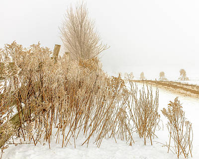 Photograph - Iced Goldenrod At Fields Edge by Chris Bordeleau
