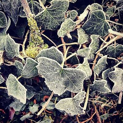 Forest Photograph - Iced Ivy by Nic Squirrell
