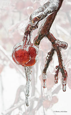 Photograph - Iced Red Cherries by Barbara McMahon