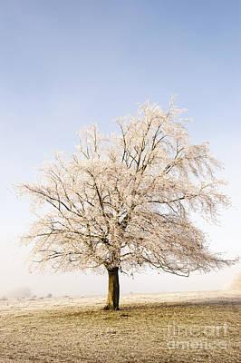 Iced Tree Art Print by Anne Gilbert