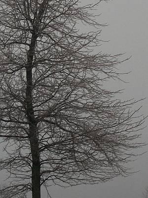 Iced Tree Original by Wide Awake Arts