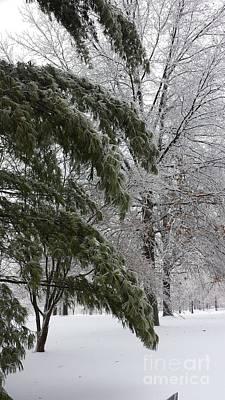 Iced Trees Art Print