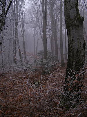 Photograph - Iced Woodland by Tamyra Crossley