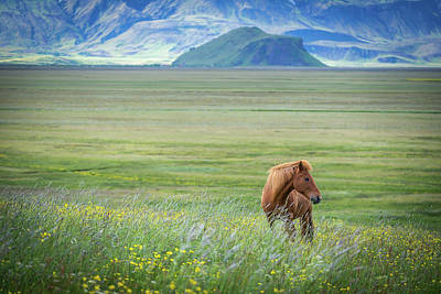Iceland Horse Wall Art - Photograph - Iceland In A Nutshell by Petra M. Schmitz