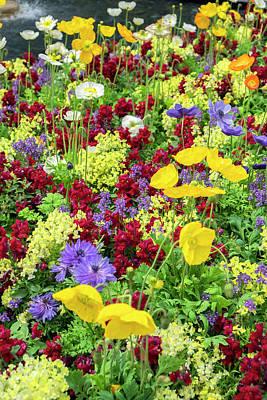 Antirrhinum Wall Art - Photograph - Iceland Poppy In A Garden, Kennett by Lisa S. Engelbrecht