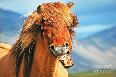 Photograph - Icelandic Horse by JR Photography