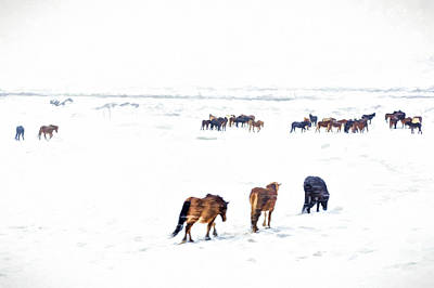 Photograph - Icelandic Horses by Maria Coulson