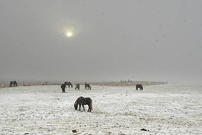 Photograph - Icelandic Horses On Snowy Landscape by Raul Touzon