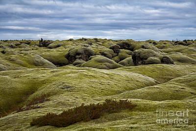 Icelandic Moss Art Print by Miso Jovicic