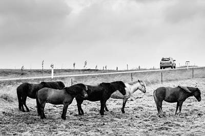 Road Photograph - Icelandic Ponies by Alexey Stiop