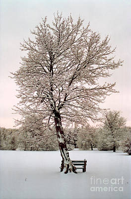 Photograph - Icetree by Teri Brown