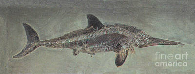 Triassic Period Photograph - Ichthyosaurus Acutirostris, Mesozoic by Science Source