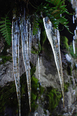 Photograph - Icicles by Adria Trail