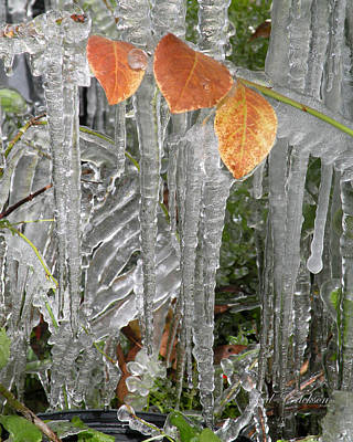 Photograph - Icicles And Orange Leaves by rd Erickson
