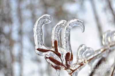 Photograph - Icicles Curling Upward by Staci Bigelow