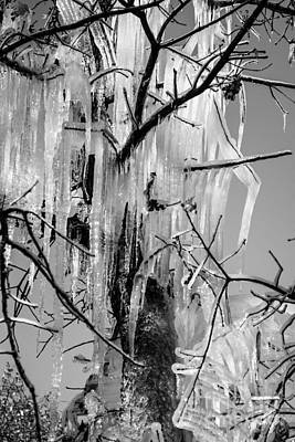 Photograph - Icicles In A Tree by Imagery by Charly