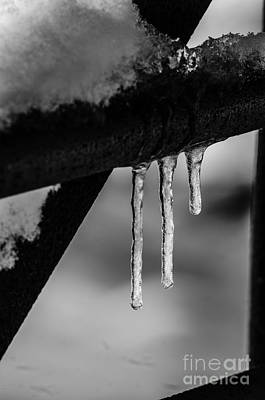 Photograph - Icicles by JT Lewis