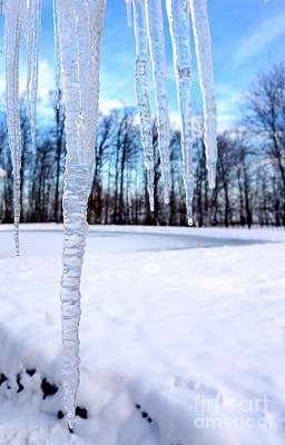 Photograph - Icicles by Rachel Munoz Striggow