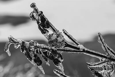 Photograph - Icy Cold by JT Lewis