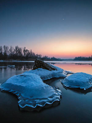 Icy Jellyfish Print by Davorin Mance