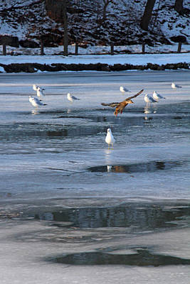 Vermeer Rights Managed Images - Icy Lake Royalty-Free Image by Munir Alawi