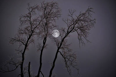 Photograph - Icy Moon by Emily Stauring