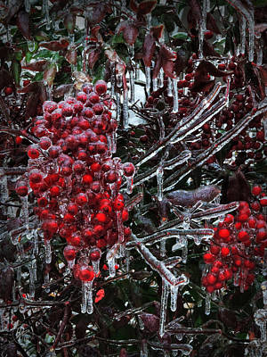 Photograph - Icy Nandina 001 by Lance Vaughn