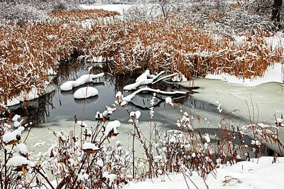 Photograph - Icy Pond by Aimee L Maher ALM GALLERY